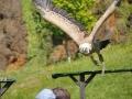 17_vogelshow_naturpark_cabarceno_p_helferich