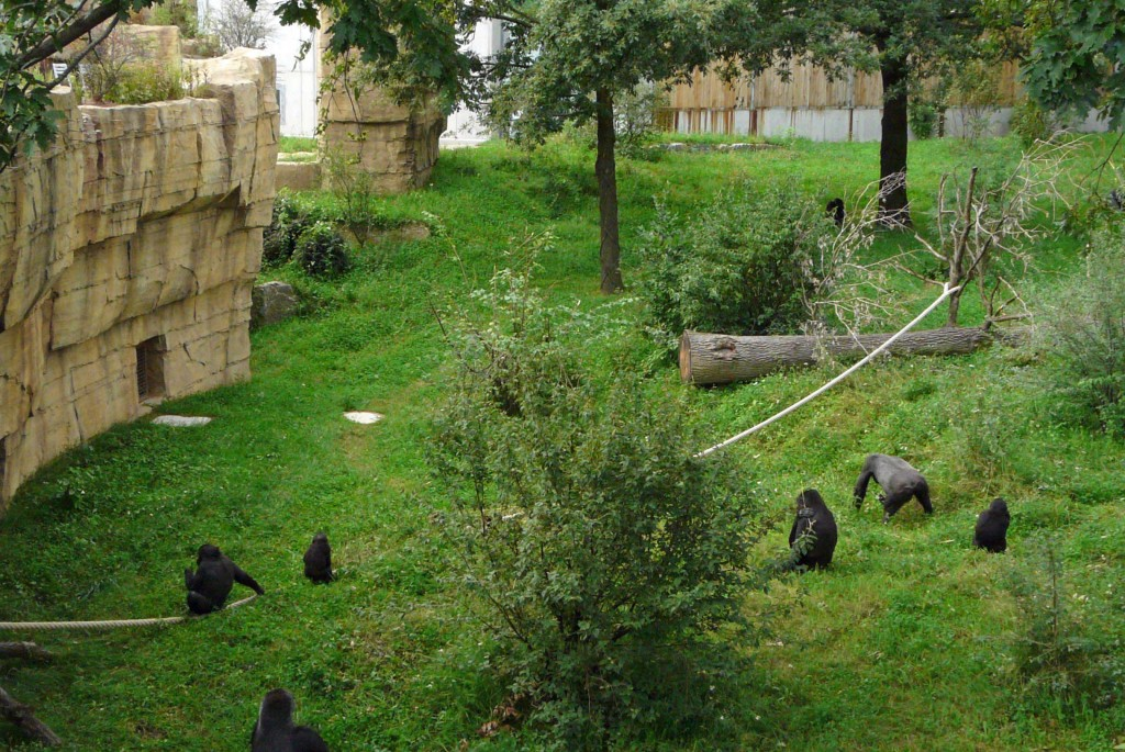 Gorillas im Grünen