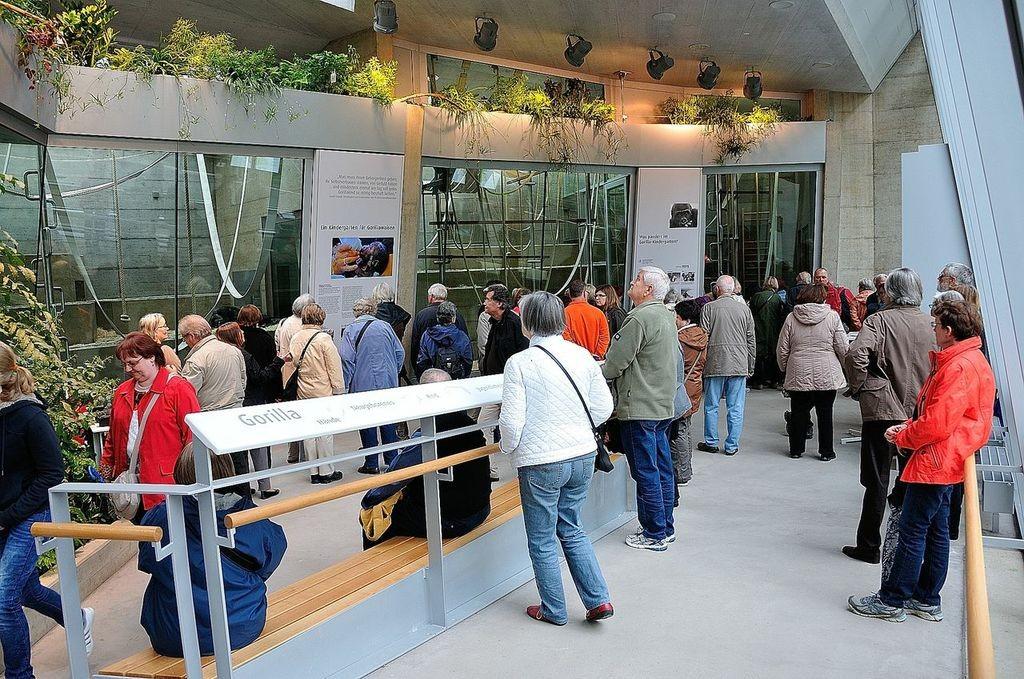 Viele Mitglieder nutzten die Gelegenheit und schauten im Menschenaffenhaus vorbei Bild: P. Helferich