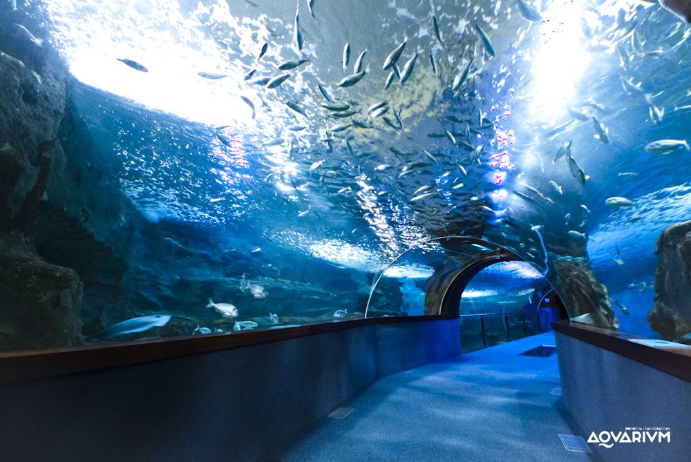 Aquarium Donostia - San Sebastián