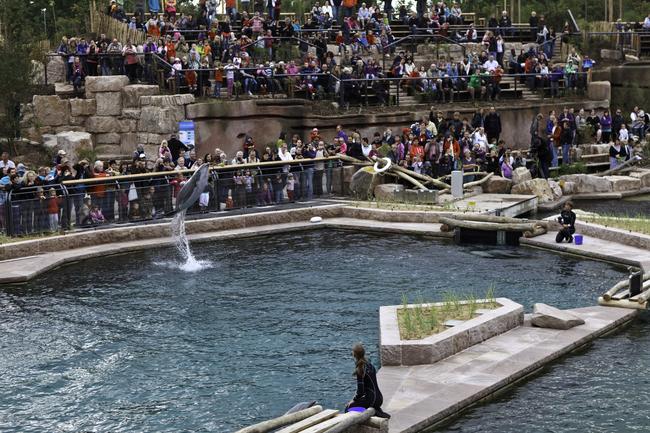 Die neu eröffnete Delphinlagune Bild: Tiergarten Nürnberg