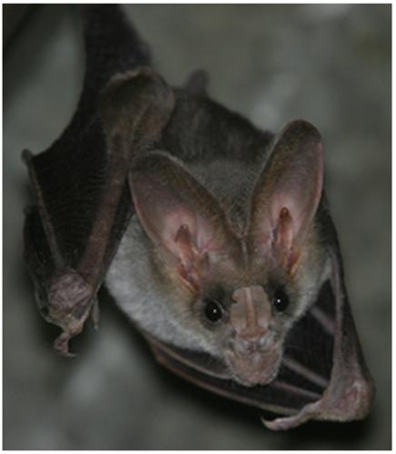 Ein falscher Vampir Bild: M. Straube