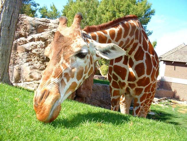 Zoo in Riga Bild: E. Stasch