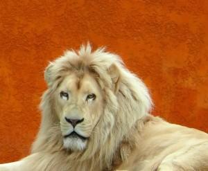 Bild: ZooParc de Beauval