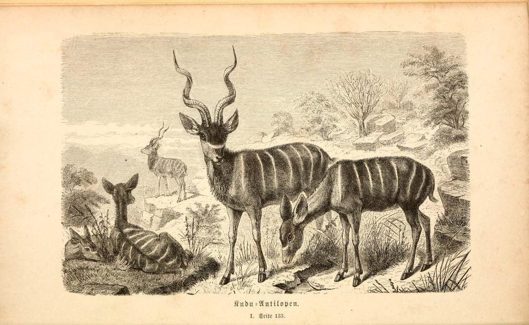 m-t-heuglin-reise-in-nordost-afrika-band-2-braunschweig-1877_schaefer