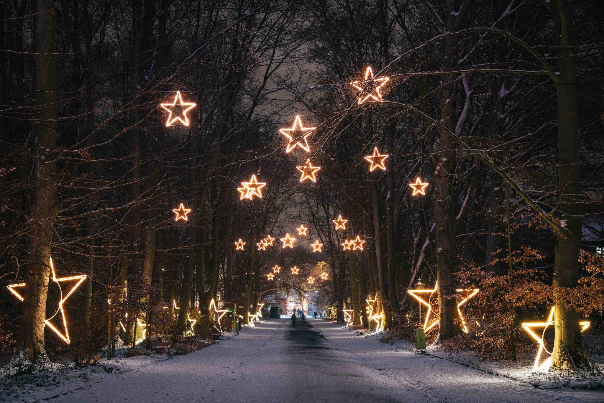 christmas garden illuminiert die wilhelma in weihnachtlichem glanz freunde und f rderer der. Black Bedroom Furniture Sets. Home Design Ideas